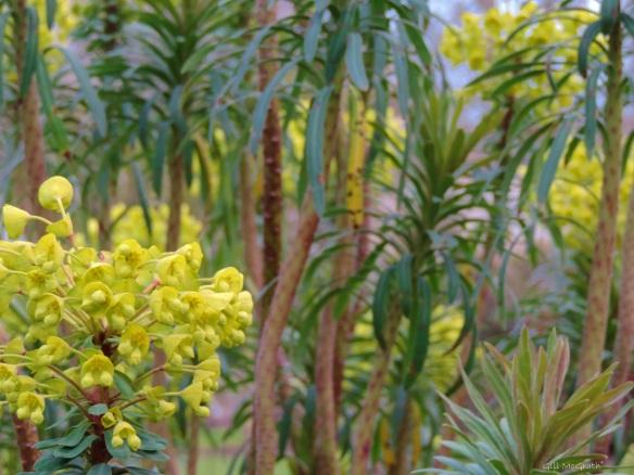 2015 03 26 3 yellow flowers jpg sig