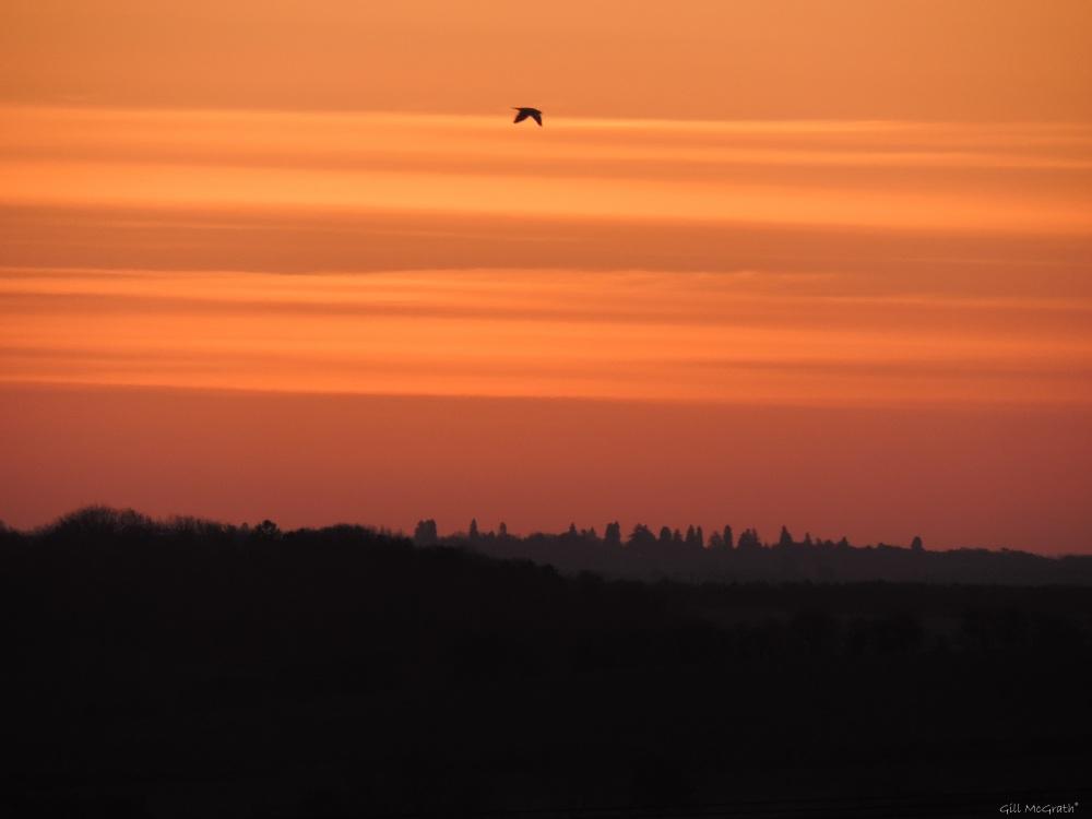 2015 03 27 555 Dawn in pink satin bird jpg sig