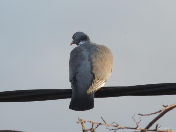 2015 03 27 6 bird sun evening 2 jpg sig