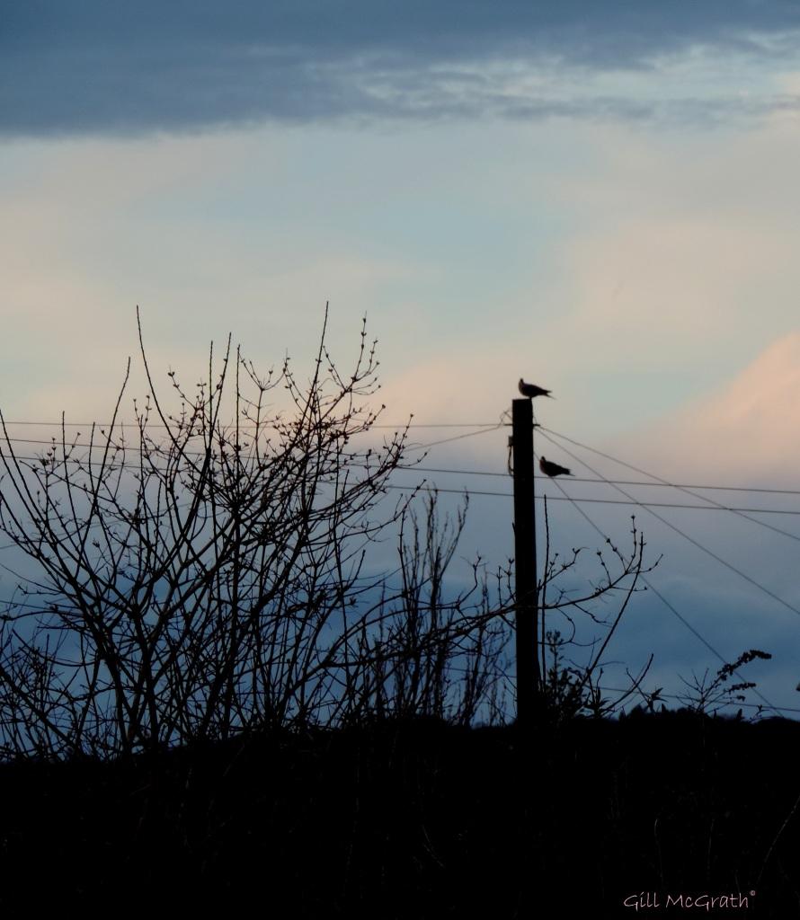 2015 03 30 29b  yesterdays sky jpg sig