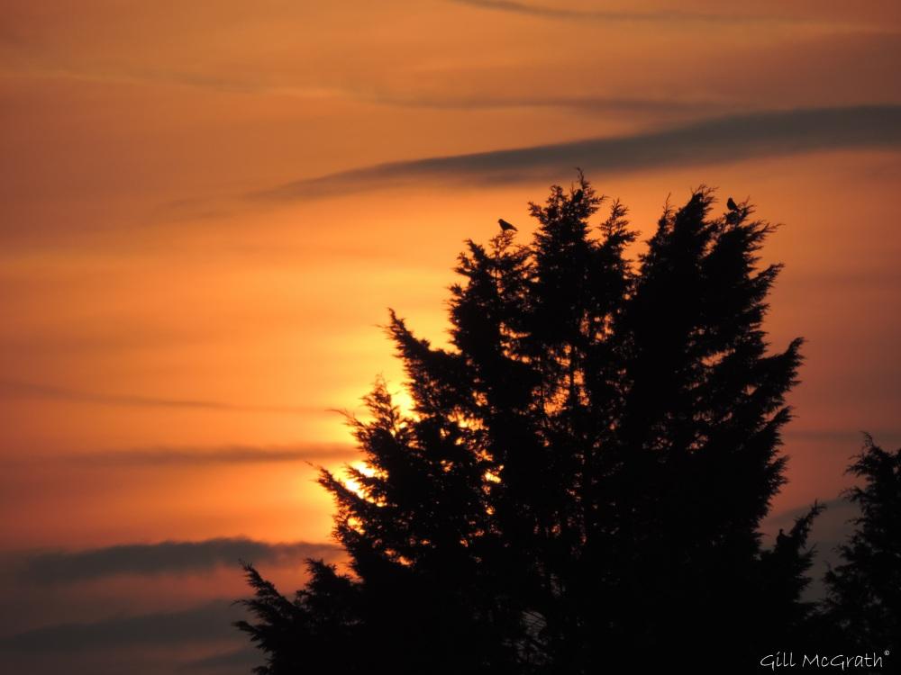 2015 03 30  birds against sunset jpg sig