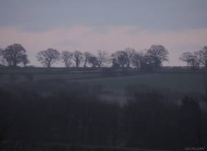 2015 03 31 528 6 trees violet jpg sig