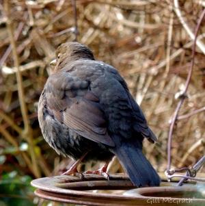 2015 bird 4 jpg sig