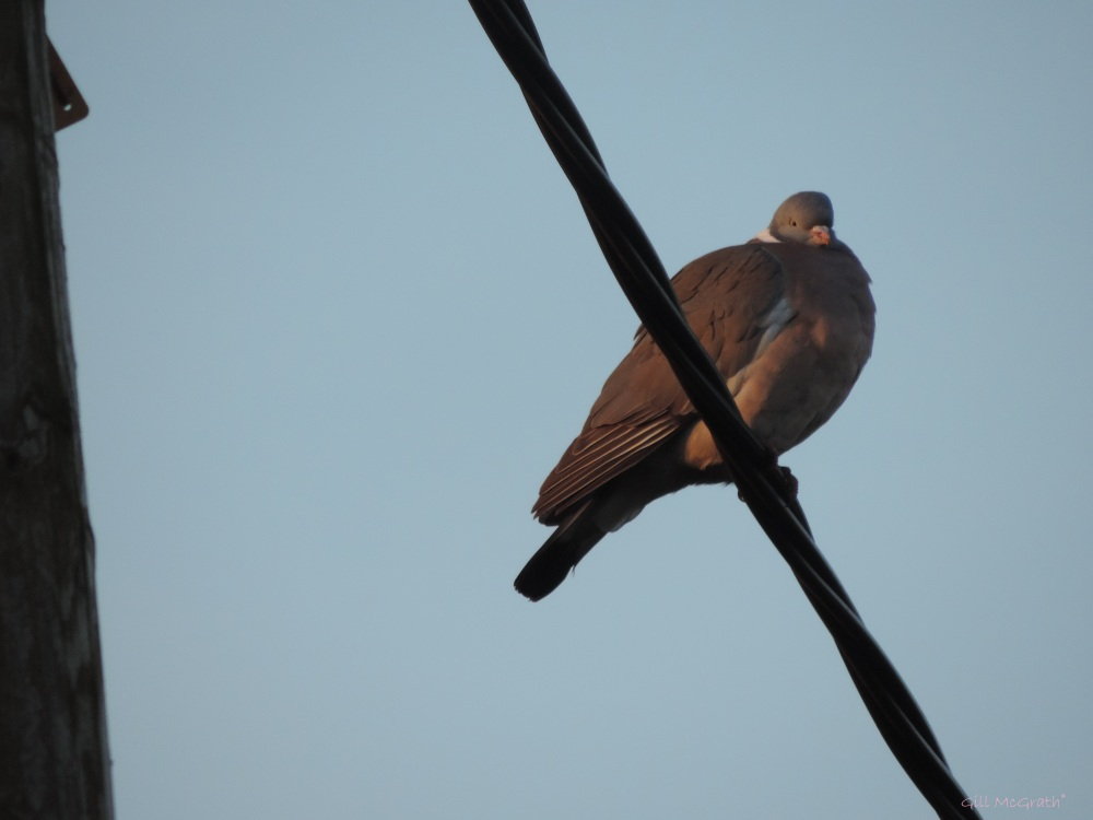 2015 04 01 bird  on the wire jpg sig