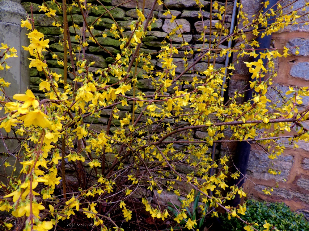 2015 04 04 5 grey wall yellow jpg sig