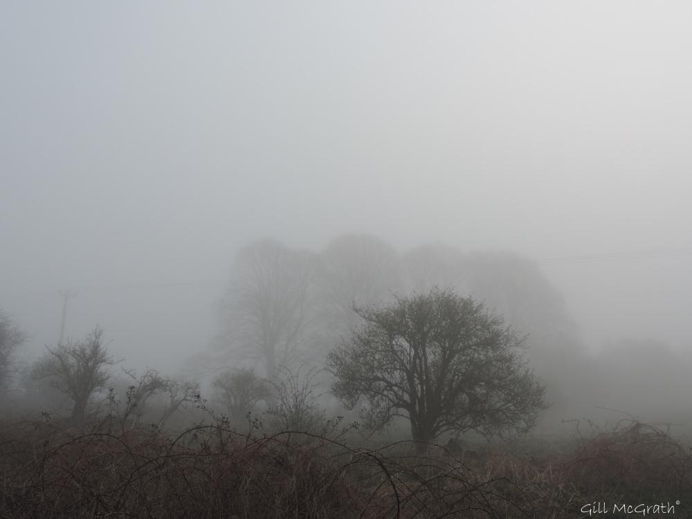 2015 04 07 layers mist DSCN8738 jpg sig