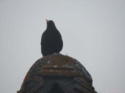 2015 04 09 blackbird sunset jpg sig