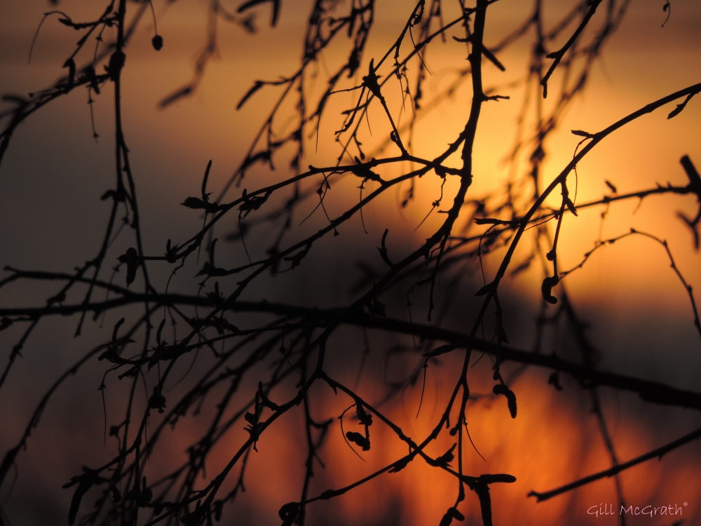 2015 04 10 649 garden  sunrise closer  jpg sig