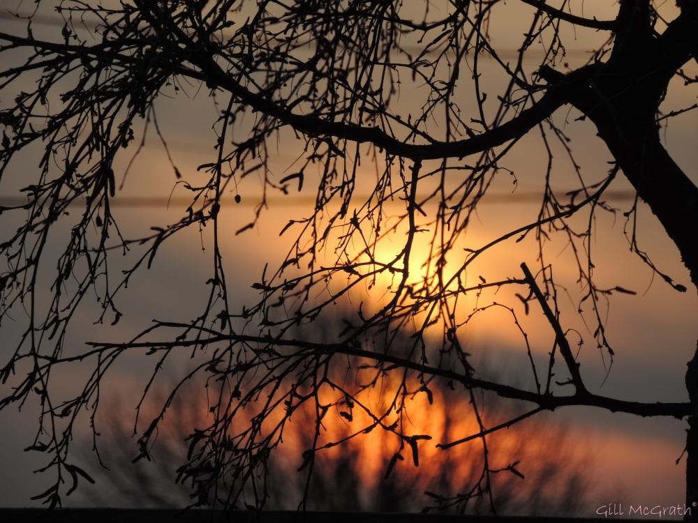 2015 04 10 649 garden sunrise jpg sig