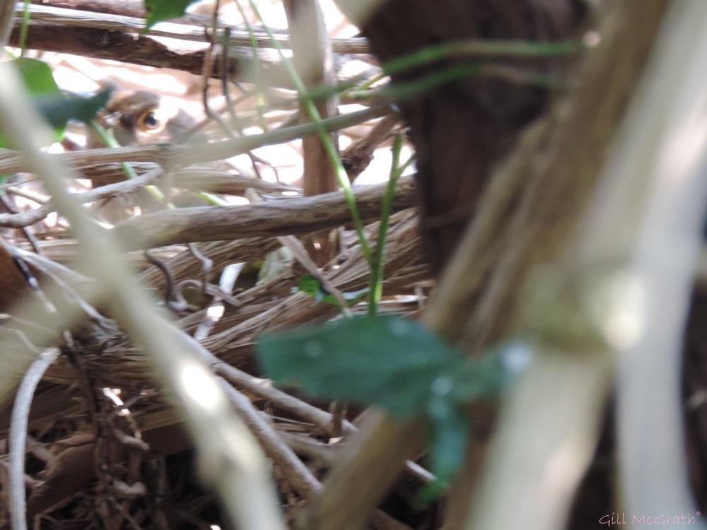 2015 04 10 mother bird eye mainly jpg sig