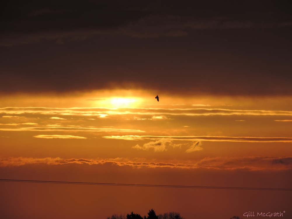 2015 04 11 654 sunrise bird a  jpg sig