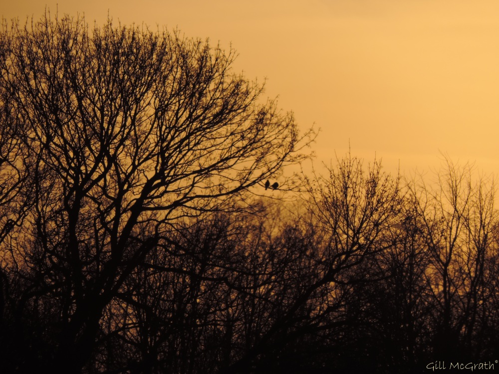 2015 04 11  two birds evening tree jpg sig