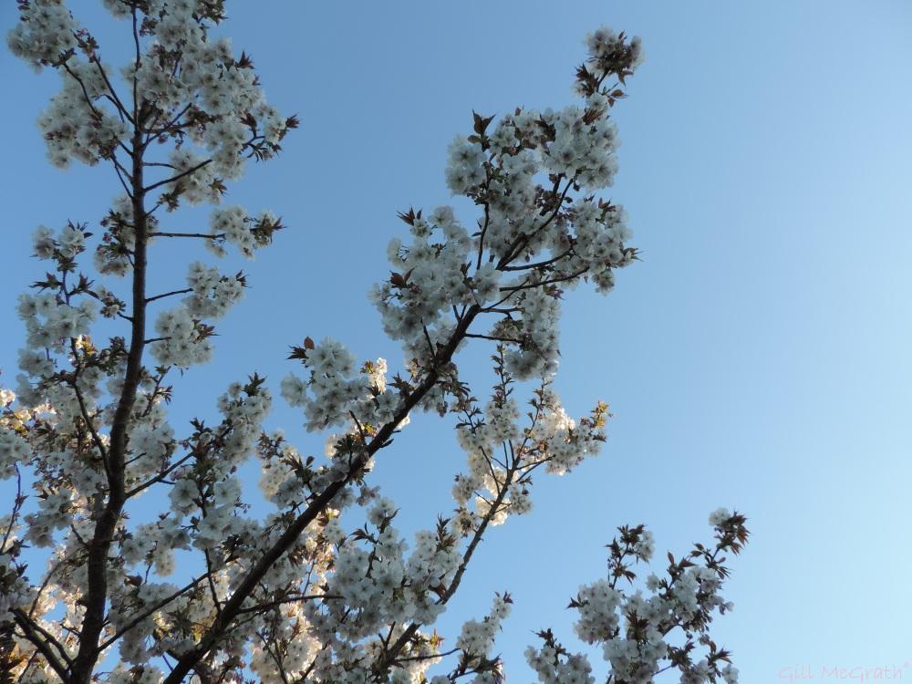 2015 04 14 blossom jpg sig