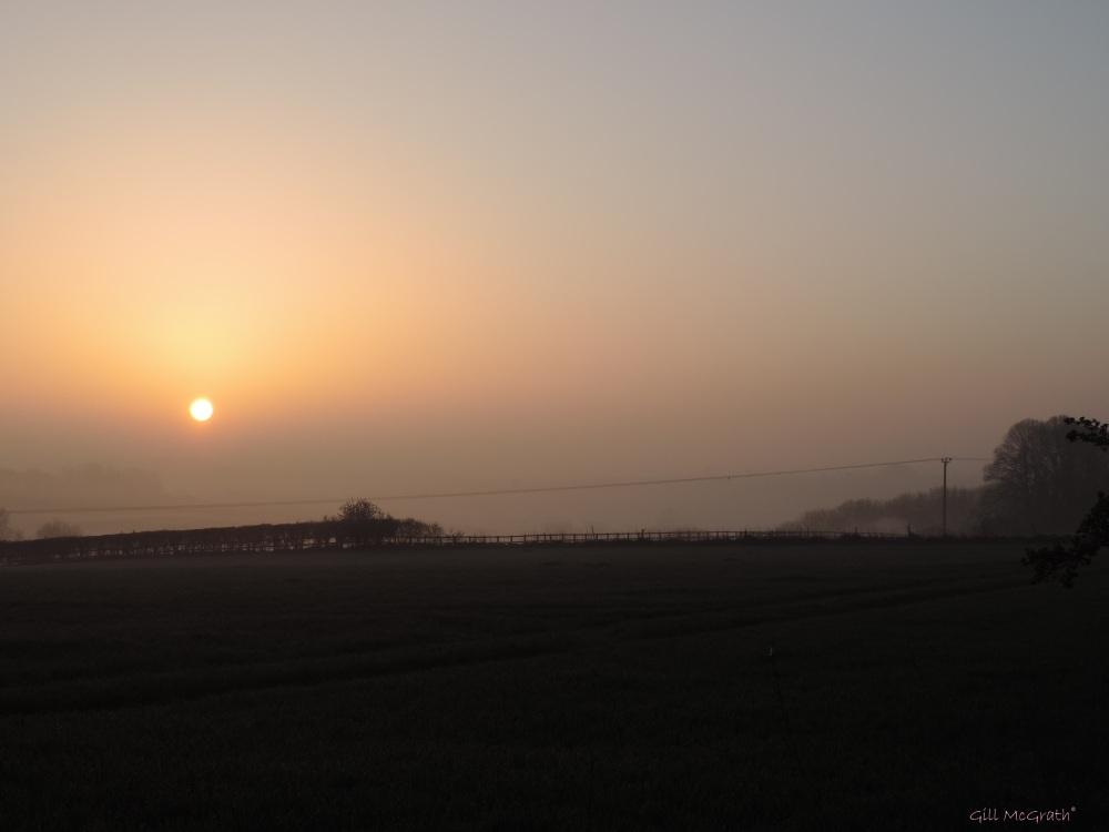 2015 04 15 631 sun on field jpg sig