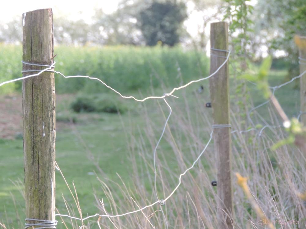 2015 04 15 fenced off jpg sig