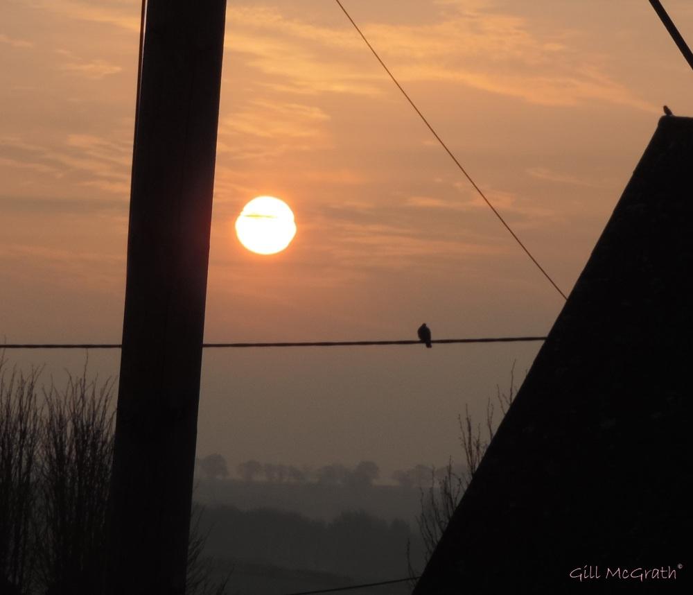 2015 04 16 633 birds wires jpg sig
