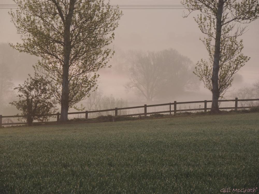 2015 04 16 644 dew  mist jpg sig