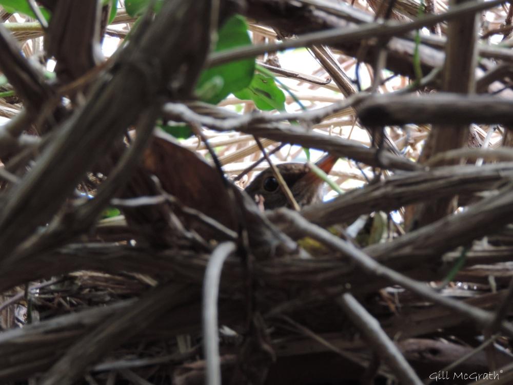 2015 04 16 nest  jpg sig