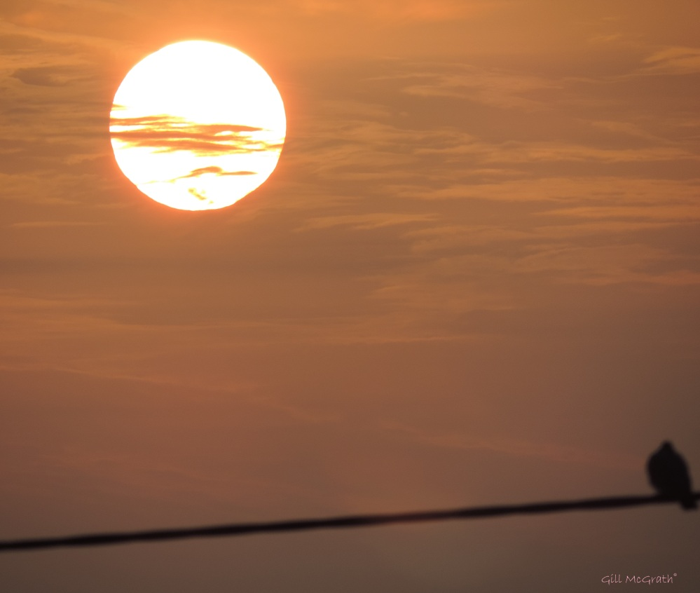 2015 04 16 sun bird jpg sig