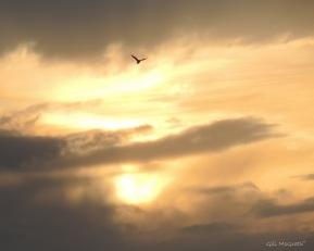 2015 04 16 sunset jpg sig