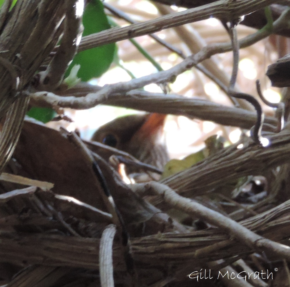 2015 04 22 bird on a nest jpg sig