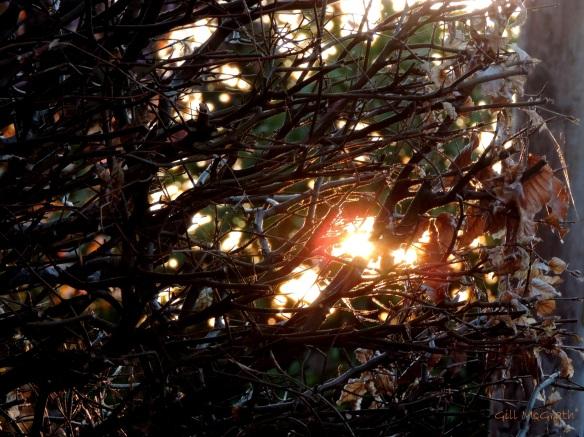 2015 04 22 thru a hedge jpg sig