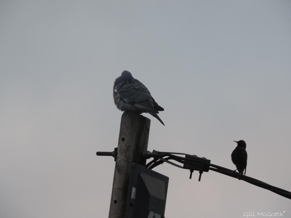 2015 04 23  6 38 birds first light DSCN1629 jpg sig