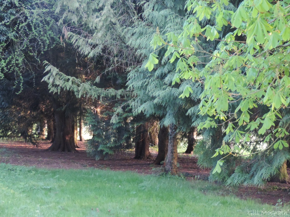 2015 04 23 trees DSCN1705jpg sig
