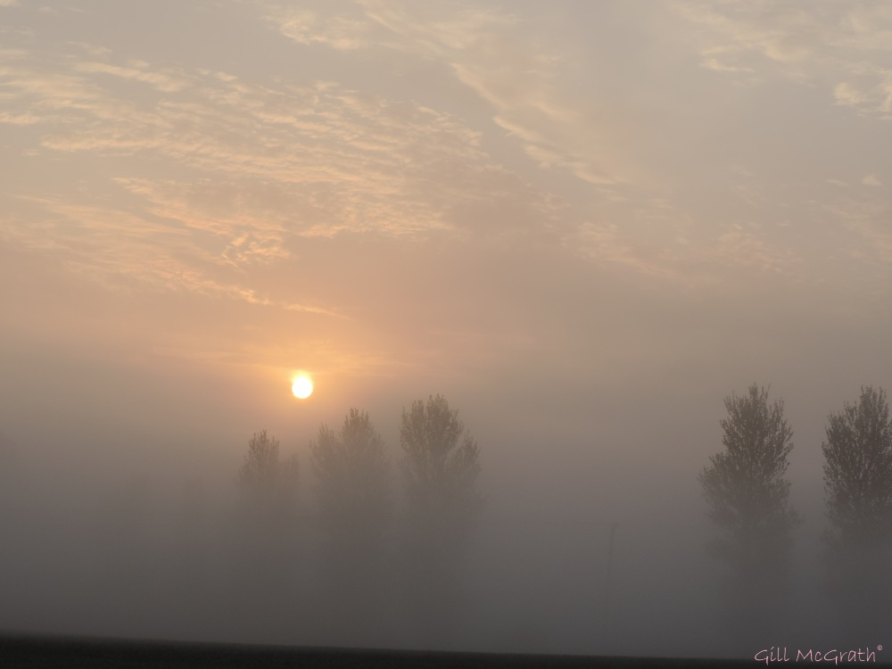 2015 04 24 620  sunrise trees DSCN1865 jpg sig