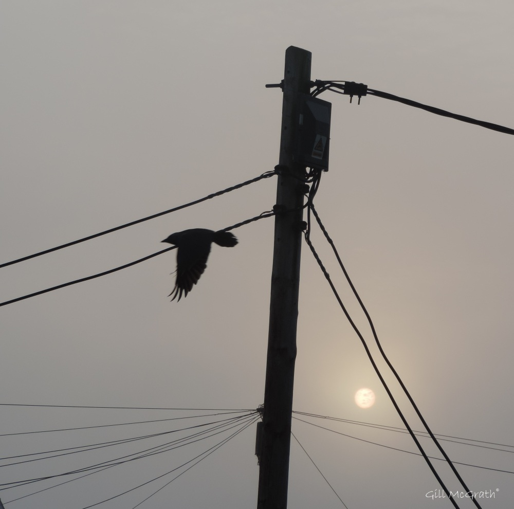 2015 04 24 649 sunrise fly DSCN1926 jpg sig