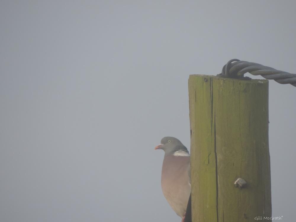2015 04 24 711 sunrise  bird DSCN1983 jpg sig