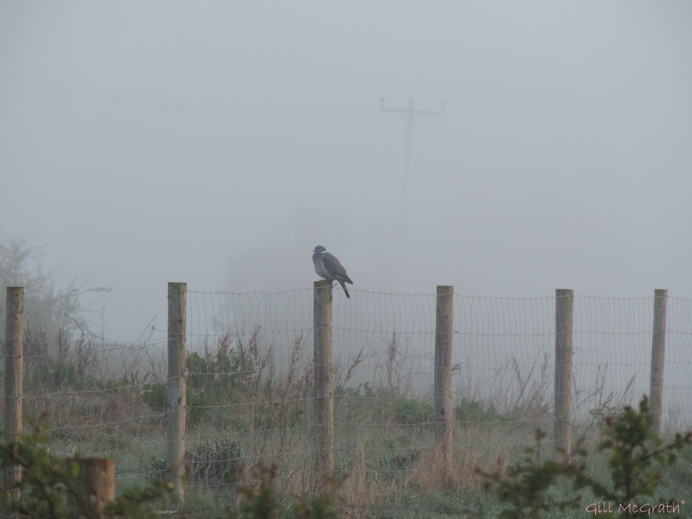 2015 04 24 sunrise  bird in a mist   622 DSCN1873 jpg sig