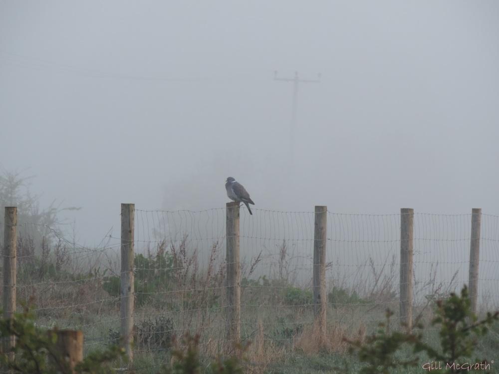 2015 04 24 sunrise  bird in a mist   622 DSCN1873 jpg sig