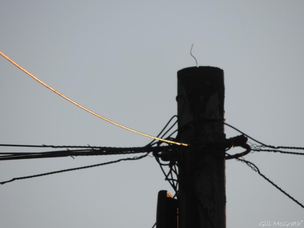 2015 04 30 1 gold on the wires DSCN2343 jpg sig