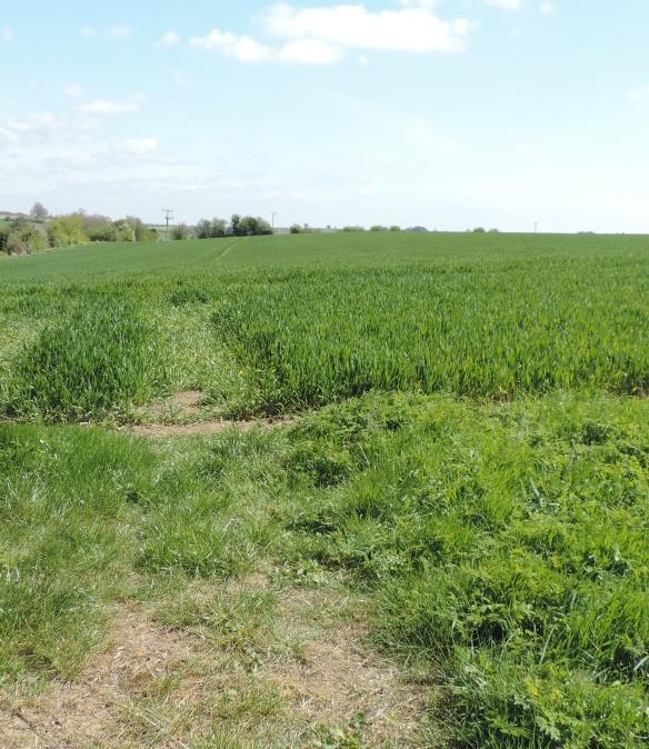 2015 04  field path DSCN1508 jpg sig