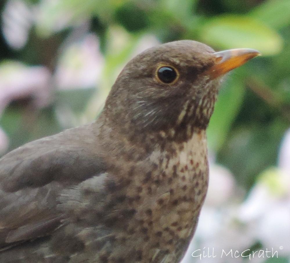 2015 05 11 sky bird DSCN4326 jpd sig