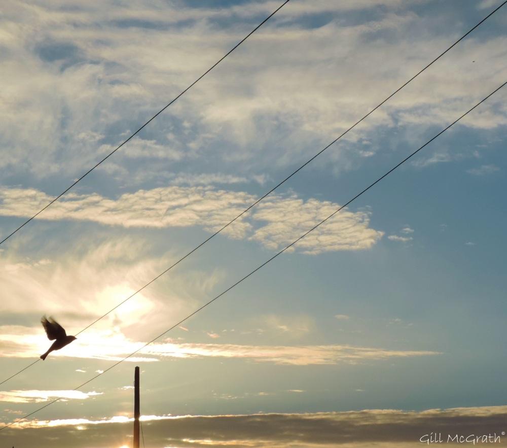 2015 05 11 sky DSCN4339 jpg sig
