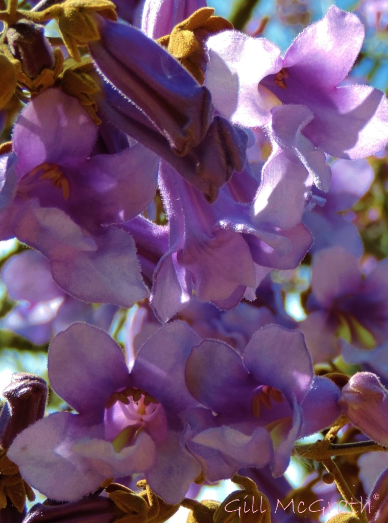 2015 05 17 purple DSCN5117 jpg sig