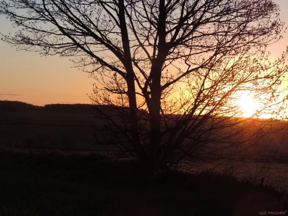 2015 05 20 528 last tree to green  sunrise   DSCN5530 jpg sig