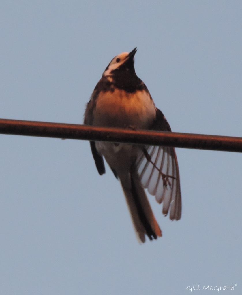 2015 05 21 little bird DSCN5723 jpg sig