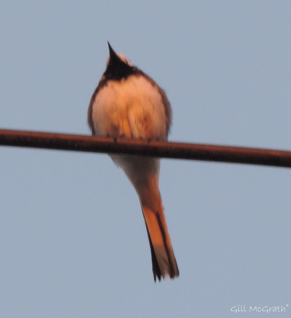 2015 05 21 little bird DSCN5724 jpg sig