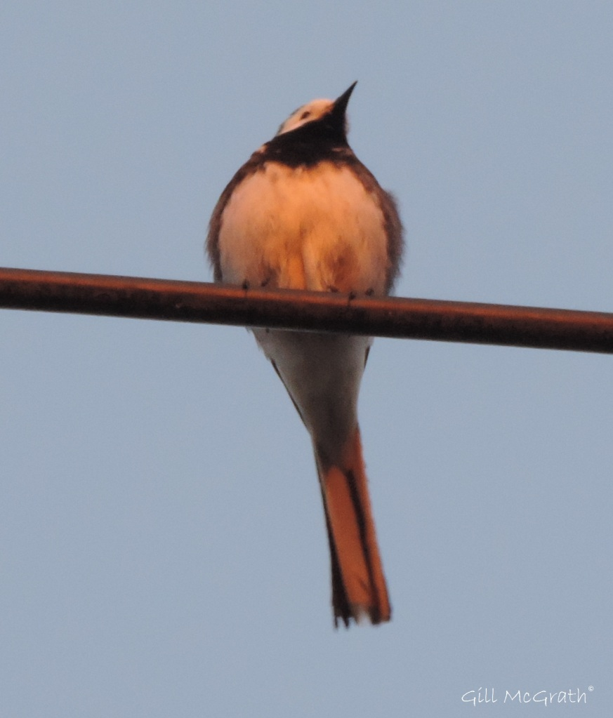 2015 05 21 little bird DSCN5725 jpg sig