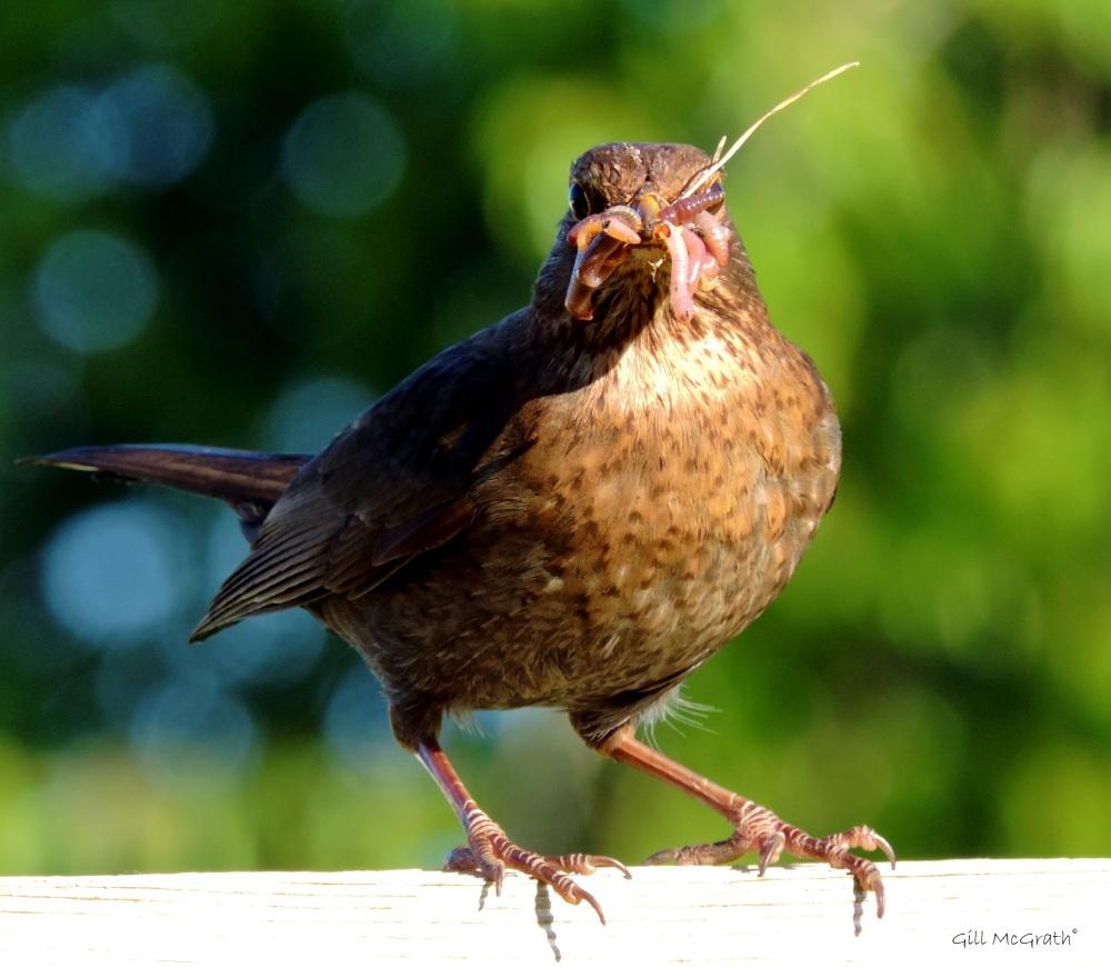 2015 05 26 bird DSCN6504 jpg sig