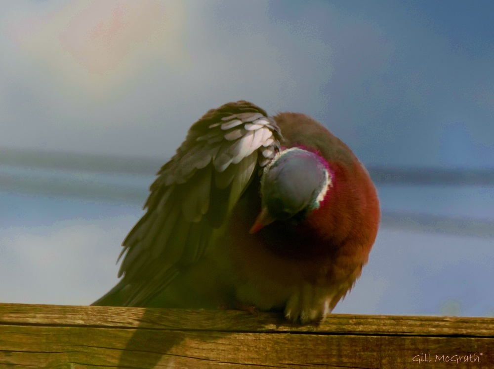 2015 05 28  3  bow bird  DSCN6802 jpg sig