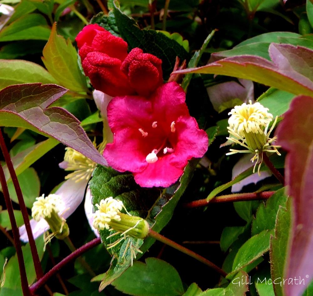 4 2015 05 30 1010 flower 1010 DSCN7131 jpg sig