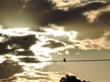 9 2015 05 30 545 bird sky morning DSCN7082 jpg sig