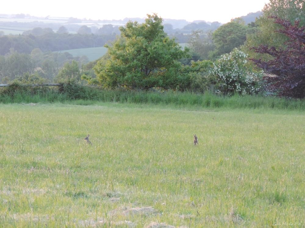 1 2015 06 10  2101 rabbit field DSCN0183 jpg sig