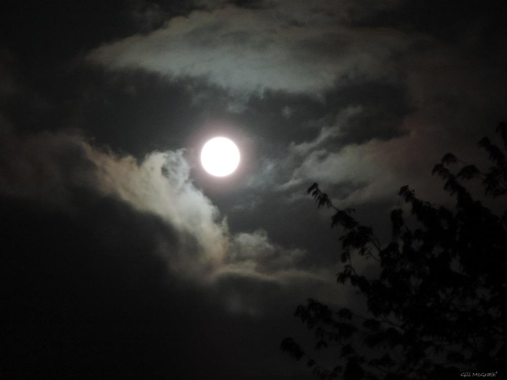 2015 06 03 1 moon 1116  DSCN7750 jpg sig