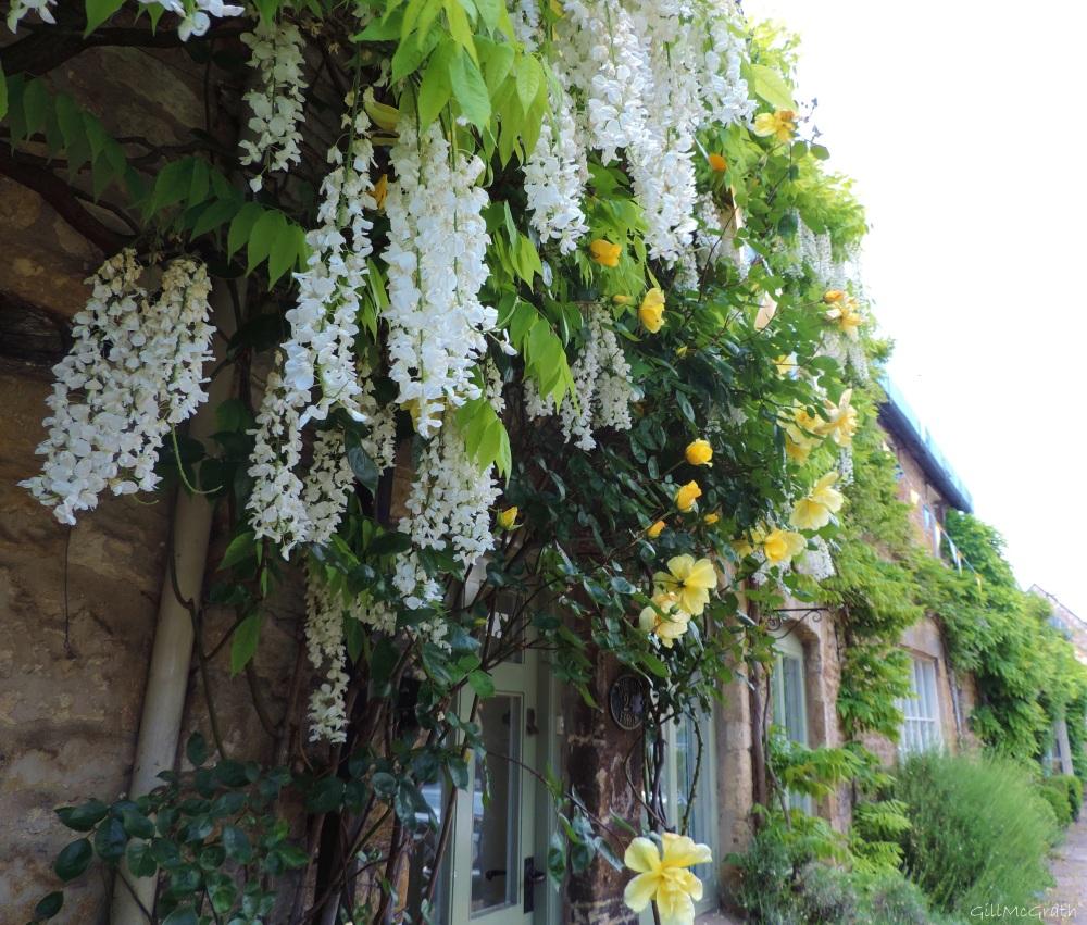 2015 06 07 flowers  DSCN8873 jpg sig