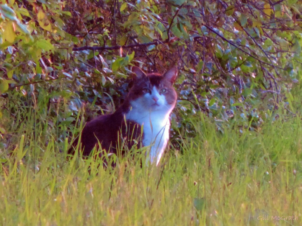 2015 06 11  cat DSCN0329 jpg sig